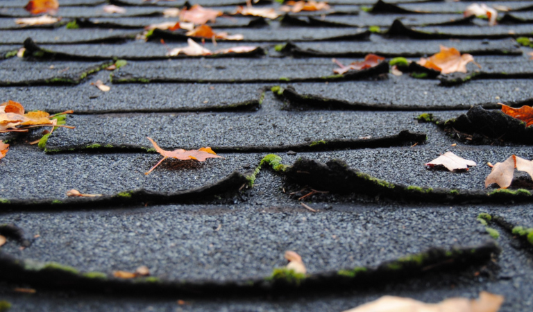 Loose Shingles in Your Yard? It May Be Time to Replace Your Roof